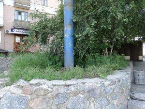 Фото: У центрі Полтави замість квітів вирощують бур'яни