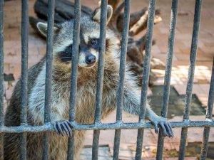 Фото: Рада заборонила пересувні зоопарки та виставки диких тварин