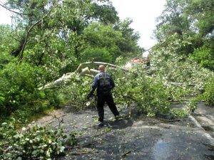 Фото: На Полтавщині негода повалила 12 дерев на дорогу
