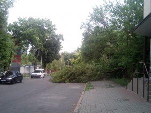 Фото: У центрі Полтави дерева впали й перекрили рух транспорту
