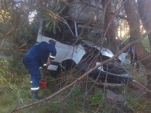Фото: ДТП на Полтавщині: після зіткнення з деревом водія затисло у вантажівці