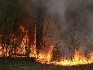 Фото: У Гадяцькому районі згоріло майже півгектара лісу