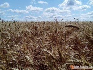 Фото: На Полтавщині намолотили півмільйона тонн зернових