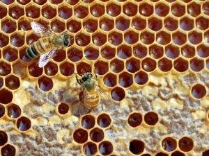 Фото: Полтавців запрошують на Свято меду
