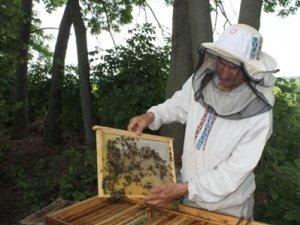 Фото: Унікальне училище в Гадячі, де навчають бджолярів, під загрозою закриття