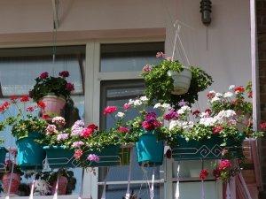 Фото: Полтавці на балконі створили затишну квітучу локацію