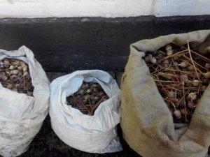 Фото: На Полтавщині жінка зберігала удома 9 кілограмів макової соломи