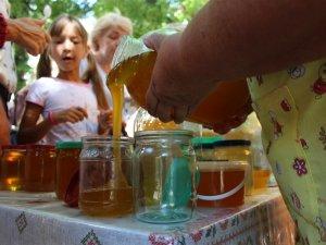 Не все спокійно в бджолиному королівстві: пасічники розповіли, чому меншає меду
