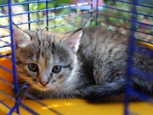 Фото: «Мені хотілося врятувати чиєсь життя» – полтавка взяла у дім безпритульне кошеня