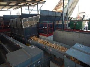 Високоякісне насіння кукурудзи та соняшника виробляють на Полтавщині (ФОТО)