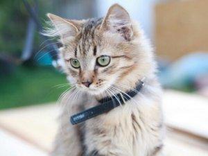 Фото: Безпритульні тварини шукають нових господарів (ФОТО)